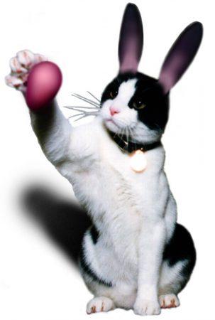 Easter Kitty